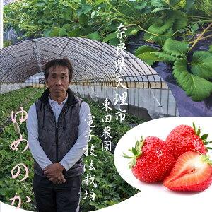 また食べたくなる苺!!電子技法栽培 東田さんのゆめのか苺(奈良県天理市産)1箱(300g×2パック入り)