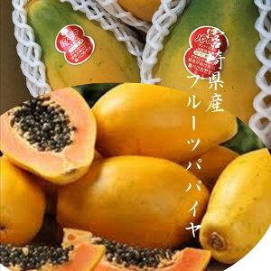 「宮崎県産フルーツパパイヤ」国産ならではの適熟!!まろやかな甘みと癖の無さ 2kg(3〜5玉)