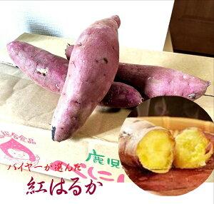 「焼き芋に最適!!」「熟成すれば蜜芋に!!」鹿児島県産 紅はるか(サツマイモ)L〜M寸 1箱2kg(6本〜12本入り)