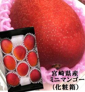 リーズナブルな完熟マンゴー!!宮崎県産 ミニマンゴー(食べきりサイズ)(800g 5〜8粒)化粧箱入※品質保護のためクッション等で保護してご配送いたします。