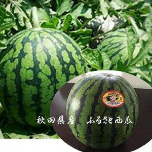 秋田県産 バイヤーが選んだふるさと西瓜「夏丸」 1玉4L以上(1玉あたり7kg以上)