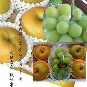9月特選!!岡山県ゴールドシャインマスカット&鳥取県産 秋甘泉梨
