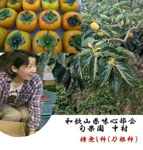 和歌山県産紀の川市味心部会 中村農園 作 「やわらかくなるとよりおいしい」味心種無し柿  L〜3L寸 お試し1.5kg(5〜8玉)
