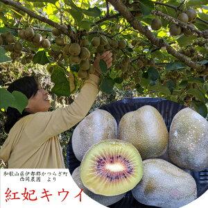 お取り寄せ!!和歌山県伊都郡かつらぎ町 西岡農園産 紅妃キウイ 1kg入り(12〜18玉)※大きさにより個数が異なります。