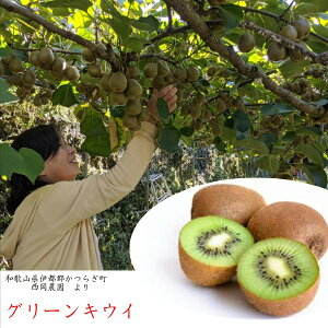 お取り寄せ!!和歌山県伊都郡かつらぎ町 西岡農園産 グリーンキウイ 2kg入り(14〜20玉)※大きさにより個数が異なります。