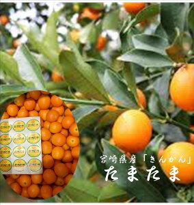 宮崎県産 きんかん「たまたま」2L〜3L寸 5kgバラ詰め※簡易箱でのお届けとなります。