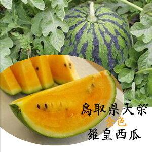 鳥取県産 バイヤーが選んだ大栄金色羅皇西瓜 2玉3L〜4Lサイズ(1玉あたり7kg以上)
