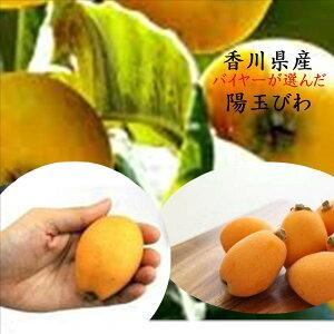 香川県産 讃岐びわ「陽玉」 1箱600g(9〜12玉)※露地栽培のため少しスレ傷があります。
