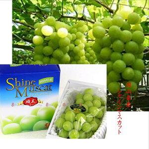 岡山県産 果皮ごと食べれて種なしです 温室栽培 シャインマスカット「晴王」1箱1房 700g化粧箱(特秀)