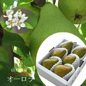 バイヤーが選んだ「山形県 オーロラ」 お試しセット1kg(3〜4玉)※簡易箱・簡易包装でのお届けとなります。
