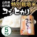 【送料無料】【山形県庄内産】特別栽培米こしひかり5kg