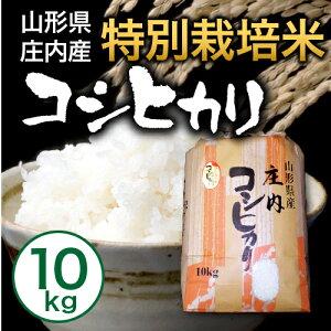 【送料無料】【山形県庄内産】特別栽培米 こしひかり10kg【smtb-k】【kb】