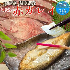 赤ガレイ カレイ 鰈 約1.4kg(3枚) 赤かれい 加熱用 特大サイズ 魚 生 鮮魚 鳥取県 山陰沖産 ふるさと 季節 旬の魚 煮つけ フライ ムニエル 焼き魚 自家製干物 一夜干し ふっくら 高たんぱく 低脂