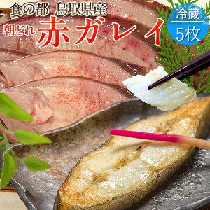 赤ガレイ カレイ 鰈 約2.3kg(5枚) 赤かれい 加熱用 特大サイズ 魚 生 鮮魚 鳥取県 山陰沖産 ふるさと 季節 旬の魚 煮つけ フライ ムニエル 焼き魚 自家製干物 一夜干し ふっくら 高たんぱく 低脂