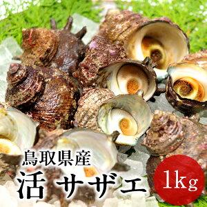 サザエ 天然活さざえ 1kg【10個前後】鳥取県 海の幸 日本海 お刺身 壺焼き BBQバーベキュー 【送料無料】