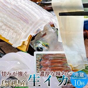 いか 白イカ 鳥取県産 烏賊 ケンサキイカ イカの女王白いか [約2.7kg×10杯] 生き 詰め合わせ 日本海 山陰沖 ふるさと 新鮮 干物 漁火 剣先いか活造り 刺身 イカソーメン いかさし いか焼き 生食
