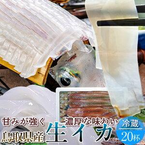 いか 白イカ 鳥取県産 烏賊 ケンサキイカ イカの女王白いか [約5.3kg×20杯] 生き 詰め合わせ 日本海 山陰沖 ふるさと 新鮮 干物 漁火 剣先いか活造り 刺身 イカソーメン いかさし いか焼き 生食