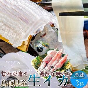 いか 白イカ 鳥取県産 烏賊 ケンサキイカ イカの女王白いか [約800g×3杯] 生き 詰め合わせ 日本海 山陰沖 ふるさと 新鮮 干物 漁火 剣先いか活造り 刺身 イカソーメン いかさし いか焼き 生食