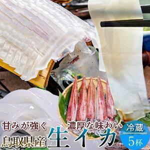いか 白イカ 鳥取県産 烏賊 ケンサキイカ イカの女王白いか [約1.4kg×5杯] 生き 詰め合わせ 日本海 山陰沖 ふるさと 新鮮 干物 漁火 剣先いか活造り 刺身 イカソーメン いかさし いか焼き 生食