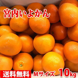 【送料無料】愛媛県産 宮内いよかん 秀 Mサイズ 10kg