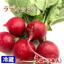 愛知県産 ラディッシュ 5本入りパック