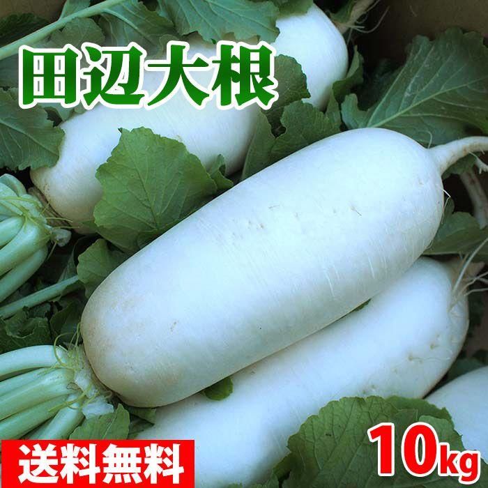 大阪府産 田辺大根 秀品・Mサイズ 約10本入 10kg