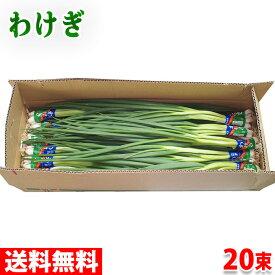 【送料無料】広島県産 わけぎ 2kg(100g×20束)
