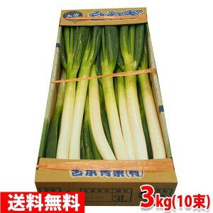 【送料無料】大分県産 白ネギ 秀品Lサイズ 3本束×10束 3kg(1箱)