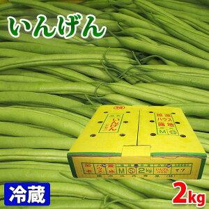 鹿児島県産 いんげん Sサイズ 約2kg
