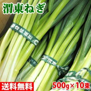 【送料無料】 徳島県産 渭東ねぎ 500g×10束入(箱)