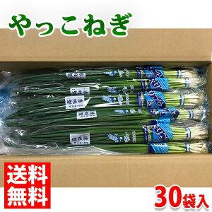 【送料無料】高知県産 やっこねぎ 秀品・Mサイズ 約100g×30袋入り(1箱:3kg)