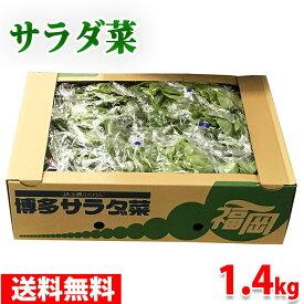 【送料無料】福岡県産 サラダ菜 約1.4kg(12株入り)箱