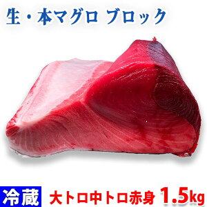 生・本マグロ 大トロ・中トロ・赤身ブロック 約1.5kg(国産・養殖)腹側