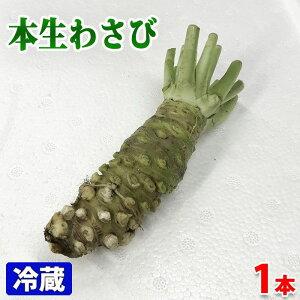 静岡県産 本生わさび 80〜100gサイズ 1本
