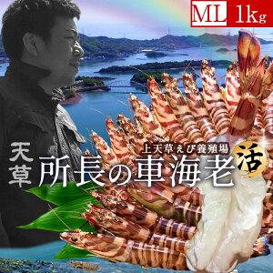 天草ブランド 所長の車海老 えび 活 1kg(30-44尾)刺身 車えび 生くるまえび 熊本県産 クルマエビ 養殖場 生きたまま箱詰め 新鮮 車エビ ランキング おすすめ 人気通販 産地直送 高級 年始ギフト