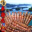 車エビ 活 車海老 特大[L 500g] 活き 送料無料 熊本県天草産 全国初のくるまえび養殖発祥の地 産地直送 獲れたて新鮮 養殖場直送 高級…