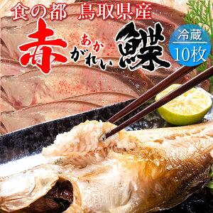 赤ガレイ カレイ 鰈 約4.6kg(10枚) 赤かれい 加熱用 特大サイズ 魚 生 鮮魚 鳥取県 山陰沖産 ふるさと 季節 旬の魚 煮つけ フライ ムニエル 焼き魚 自家製干物 一夜干し ふっくら 高たんぱく 低