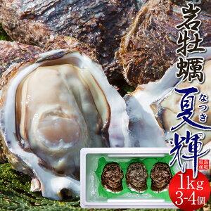 牡蠣 カキ 岩牡蠣 特大 天然物 夏輝(なつき) 1kg[3-4個入]鳥取県産 岩がき 生食用 刺身 海のミルク 焼きガキ カキフライ 大ぶり 1キロ 山陰高級いわがき 通販 産地直送 お取り寄せ お中元 夏