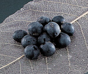 【送料無料】生黒豆2Lサイズ(生ぶどう豆)丹波種(1000g)滋賀県産大粒黒豆