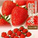 セリ価格下落のため2/23値下げ♪静岡産紅ほっぺいちご特大サイズ(12or15粒入)