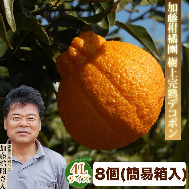 【加藤柑橘園】樹上完熟デコポン 4Lサイズ 8個セット(合計2.5キロ以上・ご自宅用ダンボール箱)