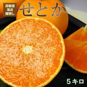 愛媛産せとか 2Lサイズ【赤秀品】5キロ(約23個〜26個前後)
