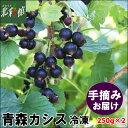【カシスファーム 青森産カシス 250g×2】送料込み・産地直送 青森