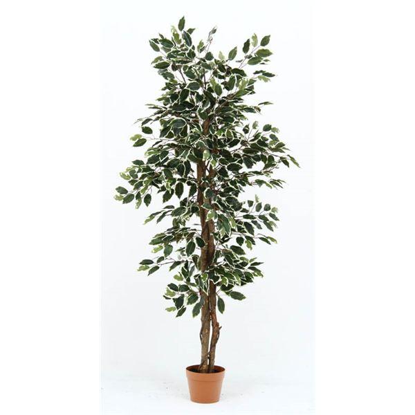 観葉植物/フェイクグリーン 【フィカス B】 6号鉢対応 幅80cm 〔リビング ガーデニング〕【代引不可】