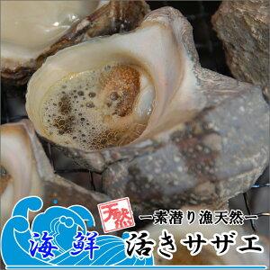 天然活きサザエ 1kg 6〜10個 送料無料 大分県産 蠑螺 さざえ 栄螺