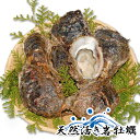 天然活き岩牡蠣 特大 4〜7個(約2kg)大分県産 カキ