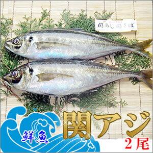 一本釣り活け締め 関アジ 400g×2尾 鮮魚 関あじ 鯵 佐賀関漁協 産地直送 お取り寄せ