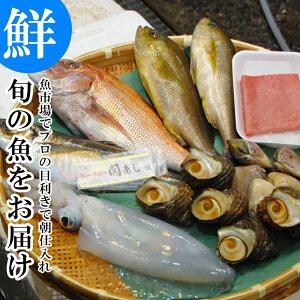 【20%OFFクーポン】旬の魚介 鮮魚 おまかせセット 極 魚市場から直送! 関アジ または 関サバ が必ず入る 大分市 公設地方 卸売 市場
