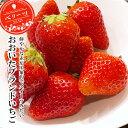 大分県産ブランドいちご ベリーツ 270g 4パック 冷蔵 苺 イチゴ 大分市公設地方卸売市場より直送