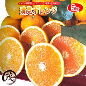 みかん 訳あり ☆速攻出荷☆ 清見 オレンジ タンゴール 5kg 送料無料 和歌山産 柑橘 果物 フルーツ 蜜柑 みかん タンゴール 訳あり きよみ ※サイズ混合です (約20玉〜30玉)